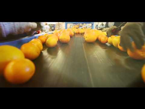 Naranjales Guarino - Packing